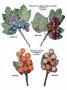 Fiori e fruttine